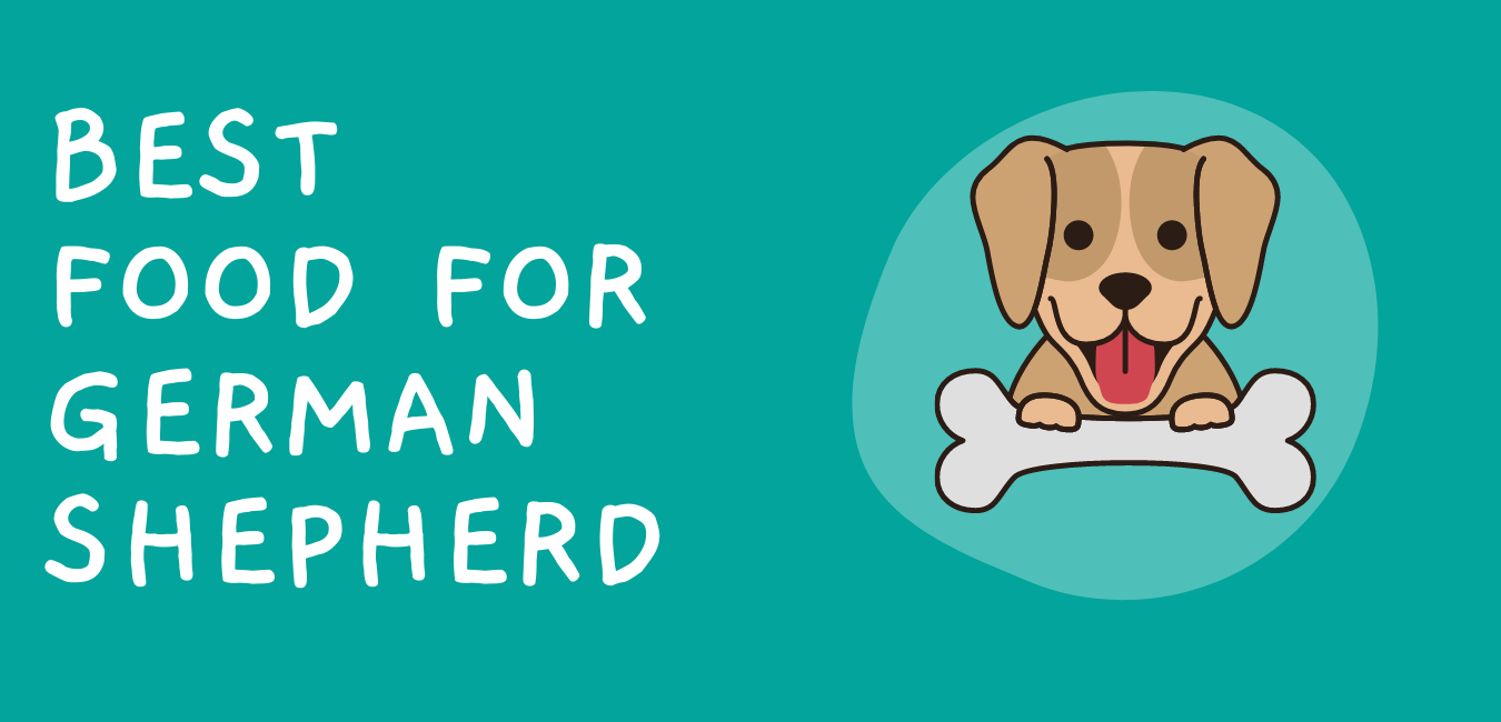 Best Dog Food for German Shepherds With Skin Allergies