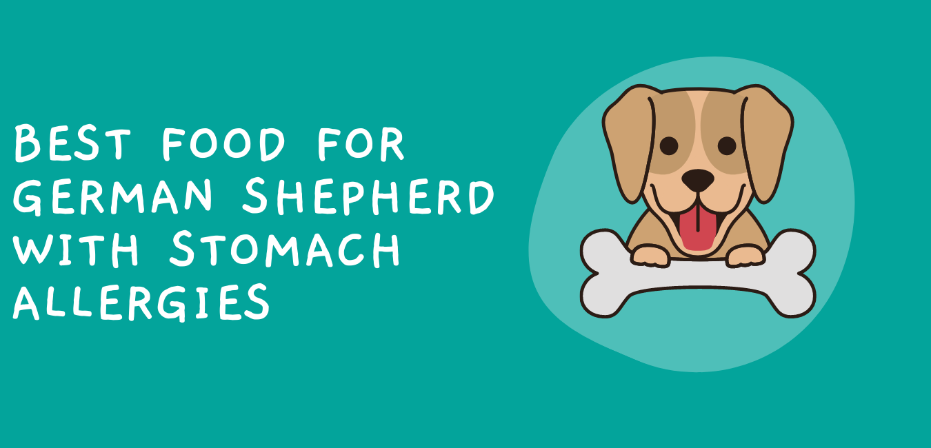 Best Food for German Shepherd with Stomach Allergies