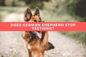 When Does German Shepherd Stop Teething