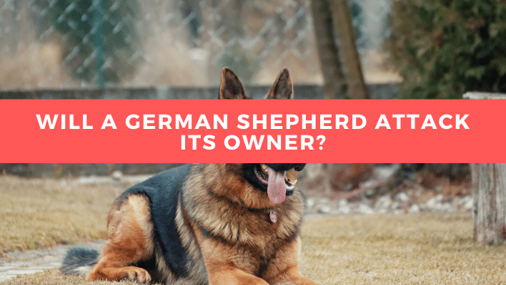 Will a German Shepherd Attack its Owner