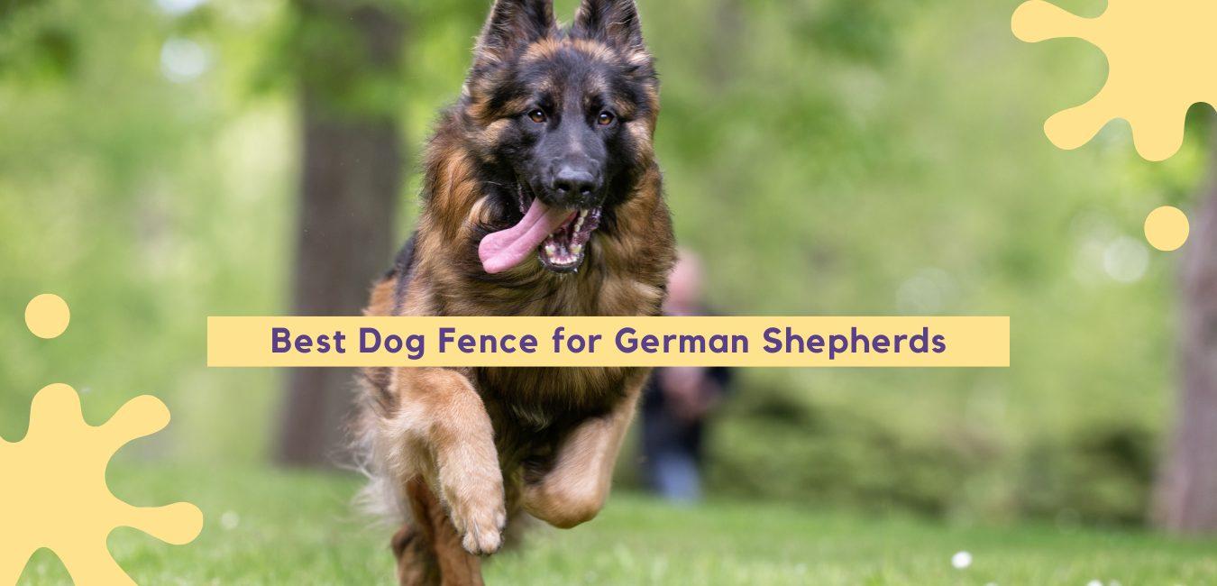 Best Dog Fence for German Shepherds