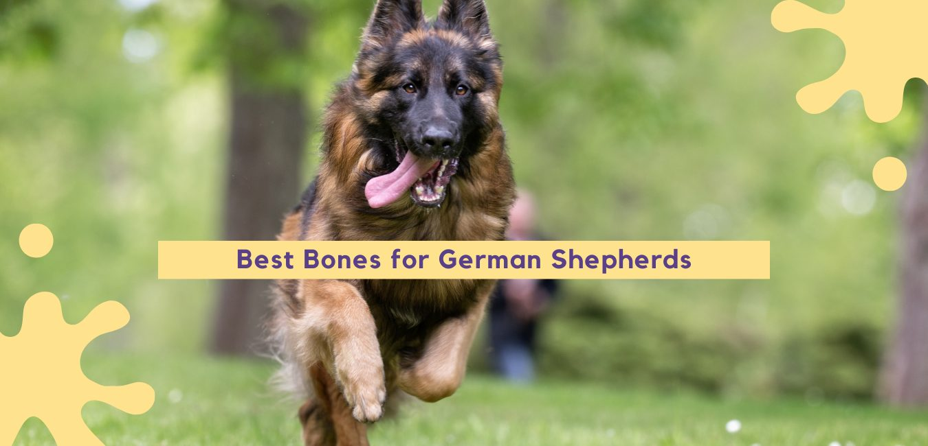 Best Bones for German Shepherds