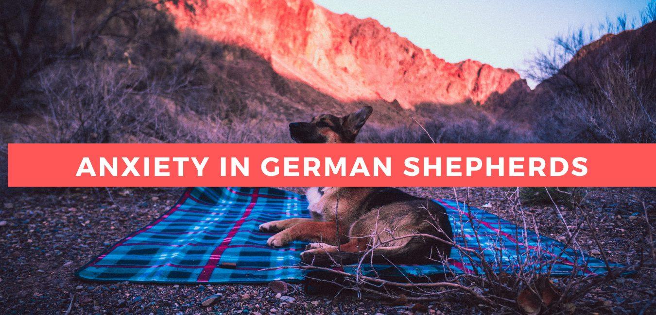 Anxiety In German Shepherds