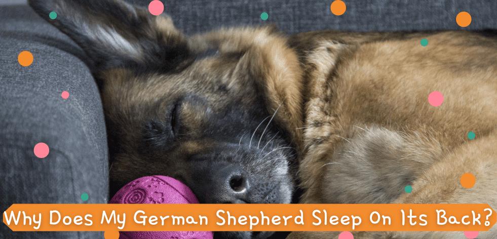 Why Does My German Shepherd Sleep On Its Back